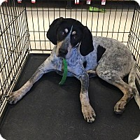 Adopt A Pet :: Edsel in CT - East Hartford, CT