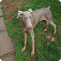 Adopt A Pet :: Preston - New Oxford, PA