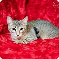 Adopt A Pet :: Sweet Pea - Little Rock, AR