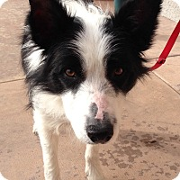 Adopt A Pet :: OB - San Pedro, CA