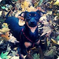Adopt A Pet :: Heman - Hollis, ME