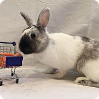 Adopt A Pet :: Phantom - Columbus, OH