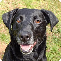 Adopt A Pet :: Novak - Bardonia, NY