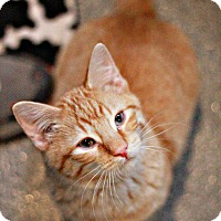 Adopt A Pet :: Pink - Lincoln, NE