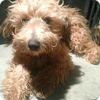 Adopt A Pet :: Koda & Kyloh-ADOPTION PENDING - Boulder, CO