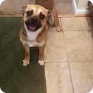 Adopt A Pet :: Jonas