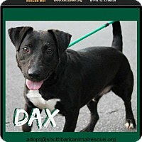 Labrador Retriever/Dachshund Mix Dog for adoption in Pensacola, Florida - Dax