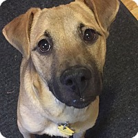 German Shepherd Dog Mix Dog for adoption in Austin, Texas - Maggie