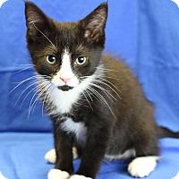 Adopt A Pet :: Luna - Winston-Salem, NC