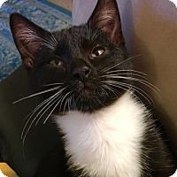 Adopt A Pet :: Frankie - Fairfax, VA