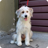 Adopt A Pet :: TJ - Los Angeles, CA