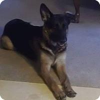Adopt A Pet :: Zoey - Rockford, IL