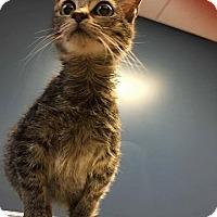 Adopt A Pet :: Vern - Charlotte, NC