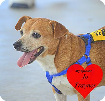 Chihuahua/Dachshund Mix Dog for adoption in San Leon, Texas - Chewie