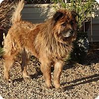 Adopt A Pet :: BURT - Eastsound, WA