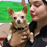Adopt A Pet :: Sally - Elyria, OH