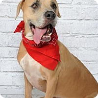 Adopt A Pet :: Tanner - Titusville, FL