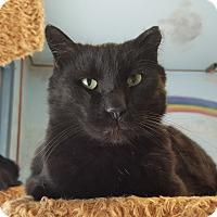 Adopt A Pet :: George - Cody, WY