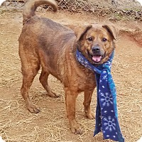 Adopt A Pet :: Boris - Kingston, TN