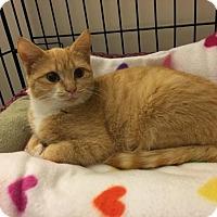 Adopt A Pet :: Stella - Winston-Salem, NC