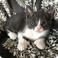 Adopt A Pet :: Eeyore - Tampa, FL