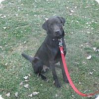 Adopt A Pet :: Crosby - Conesus, NY