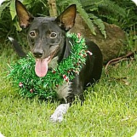 Adopt A Pet :: Nemo - Honolulu, HI