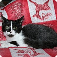 Adopt A Pet :: Reisling - Santa Rosa, CA