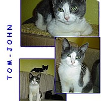 Adopt A Pet :: Tom-John - Bunnell, FL