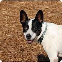Adopt A Pet :: Lolita - Ft. Myers, FL