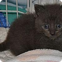 Adopt A Pet :: Sweep and Sweela - Island Park, NY