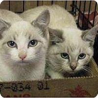 Adopt A Pet :: Deko - Jacksonville, FL