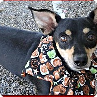 Adopt A Pet :: Alvin - Queen Creek, AZ