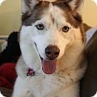 Adopt A Pet :: Cadence