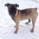 Adopt A Pet :: Yanni