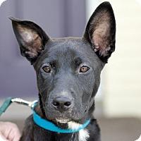 Adopt A Pet :: Natalie - Marietta, GA