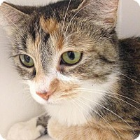 Adopt A Pet :: Calista - Chicago, IL