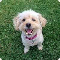 Adopt A Pet :: Video! Lovely Libby - West Hollywood, CA