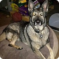 Adopt A Pet :: Gypsy - Ortonville, MI