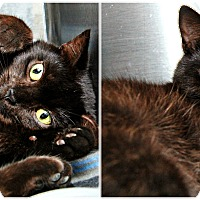 Adopt A Pet :: Clarice - Forked River, NJ