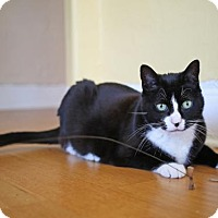 Adopt A Pet :: Talulah - Oakland, CA