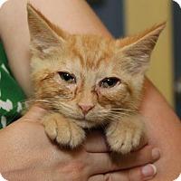 Adopt A Pet :: Acorn - Richmond, VA