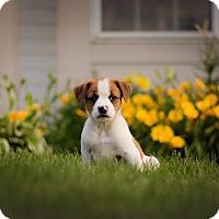 Adopt A Pet :: Zeeus - West Chicago, IL