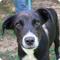 Adopt A Pet :: Harper - Yardley, PA