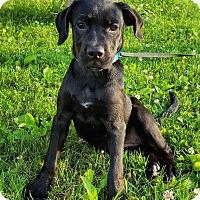 Adopt A Pet :: Poppy - New Oxford, PA