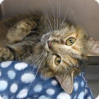 Adopt A Pet :: Petco Charlotte - Batavia, NY