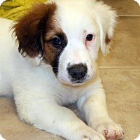 Adopt A Pet :: Polly - Rochester, NY