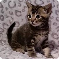 Adopt A Pet :: Tink - Rosamond, CA