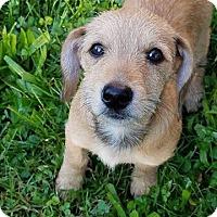 Adopt A Pet :: Madonna - Columbus, OH