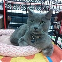 Adopt A Pet :: Bradley - Alamo, CA